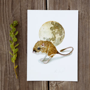 Tipton's Kangaroo Rat 5x7 Print - Native California Wildlife, Kangaroo rat print