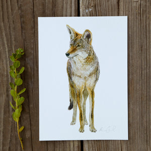 Coyote 5x7 Print - Native California Wildlife, Mammal print, Canine print