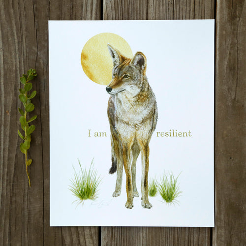 I Am Resilient 8x10 Coyote Print - Native California Wildlife, Mammal print, Canine print