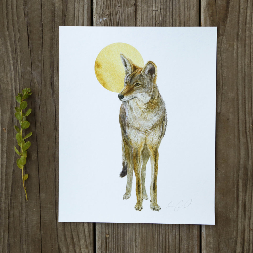 Coyote and Moon 8x10 Print - Native California Wildlife, Mammal print, Canine print