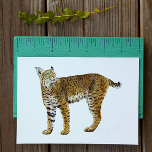 Bobcat 5x7 Print - Native California Wildlife, Mammal print