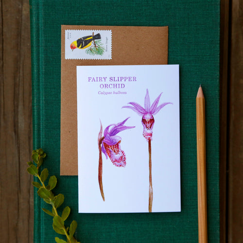 Fairy Slipper Orchid Greeting Card, Wildflower Note Card