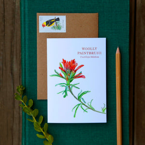 Set of 8 Wildflower Cards - Poppy, Lupine, Larkspur, Indian Paintbrush, Mariposa Lily, Pipevine, Humboldt Lily, Calypso Orchid