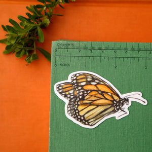 Butterflies of California Sticker Set: Three Vinyl Stickers, Monarch, California Dogface, Xerces Blue