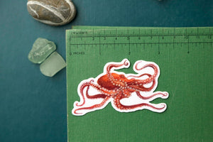 California Coast Stickers: Three Vinyl Stickers, Giant Pacific Octopus, Pacific Seahorse, Leopard Shark