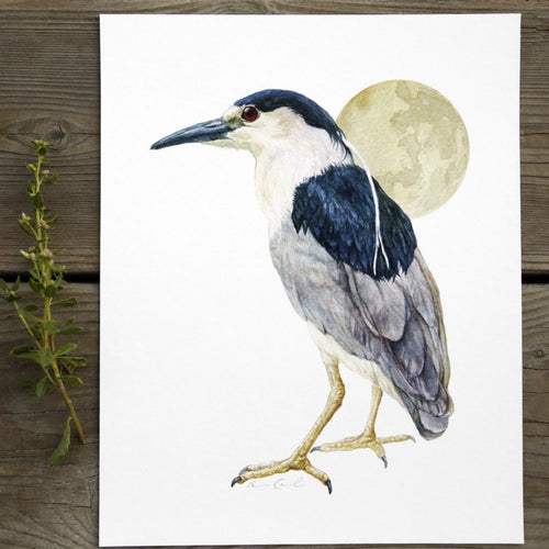 Night Heron 8x10 Print - Native California Wildlife, Bird Print, Birding gift, Nycticorax nycticorax, Black Crowned Night Heron, Oakland