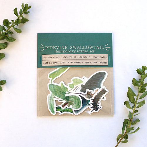 California Pipevine Swallowtail Metamorphosis: Four Temporary Tattoos