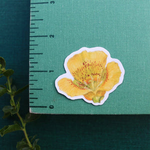 Wildflowers of California Stickers: Three Vinyl Stickers, California Poppy, Silver Lupine, Mariposa Lily