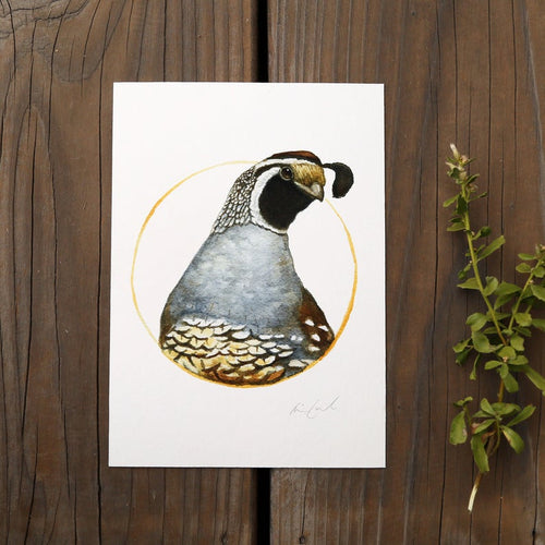 California Quail watercolor painting art print native California 5x7