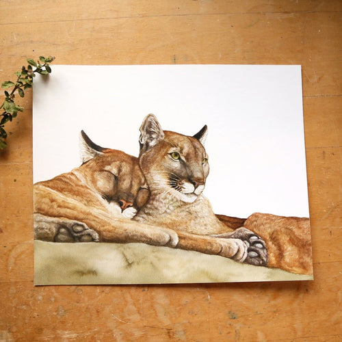 Mountain Lion  watercolor painting art print native California 8x10