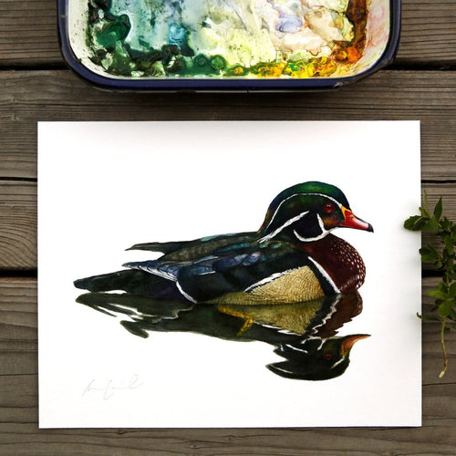 Wood Duck watercolor painting art print native California 8x10