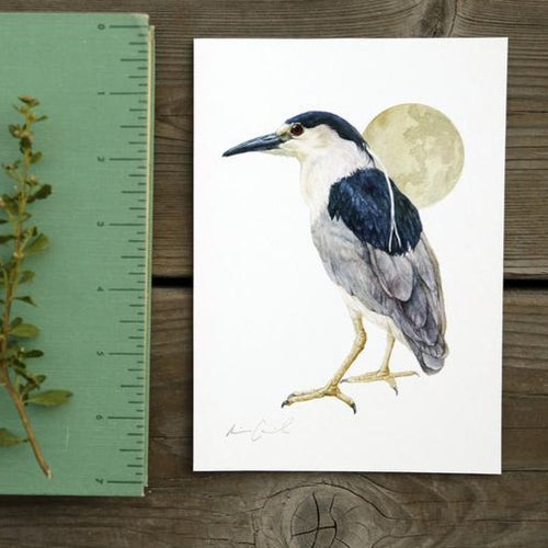 Night Heron 5x7 Print - Native California Wildlife, Bird Print, Birding gift, Black Crowned Night Heron, Nycticorax nycticorax, Oakland City