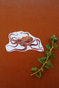Giant Pacific Octopus: Two Temporary Tattoos