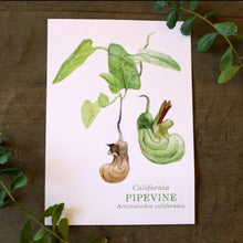 California Pipevine  watercolor painting art print native California 5x7