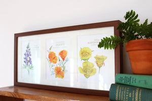 Native California wildflower watercolor painting framed art print  5x7
