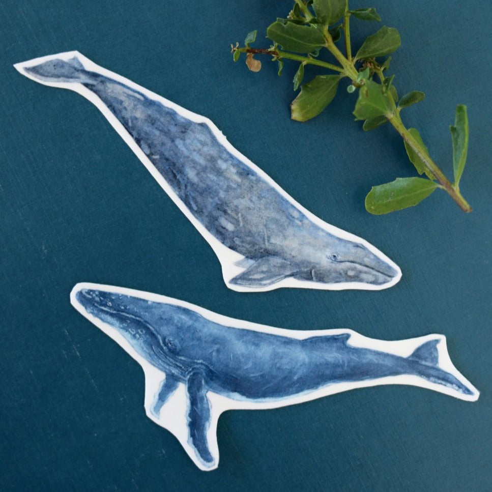 Whale Sticker Set: Two Vinyl Stickers, Humpback & Gray Whale