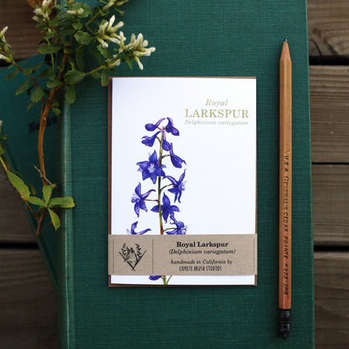 Native California wildflower royal larkspur watercolor note card
