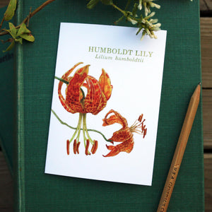 Native California wildflower humbolt lily watercolor note card set
