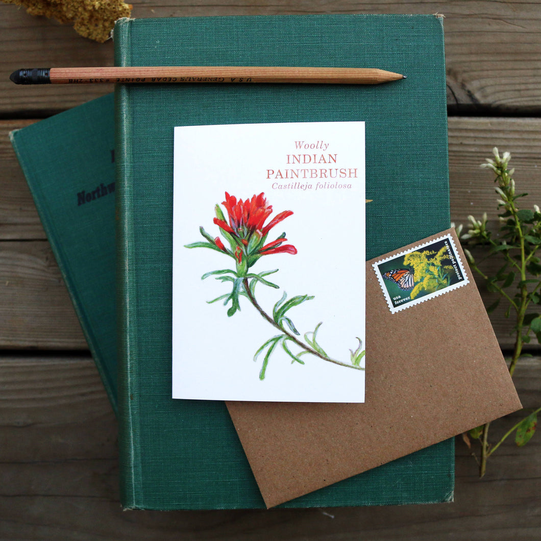 Native California wildflower woolly indian paintbrush watercolor note card