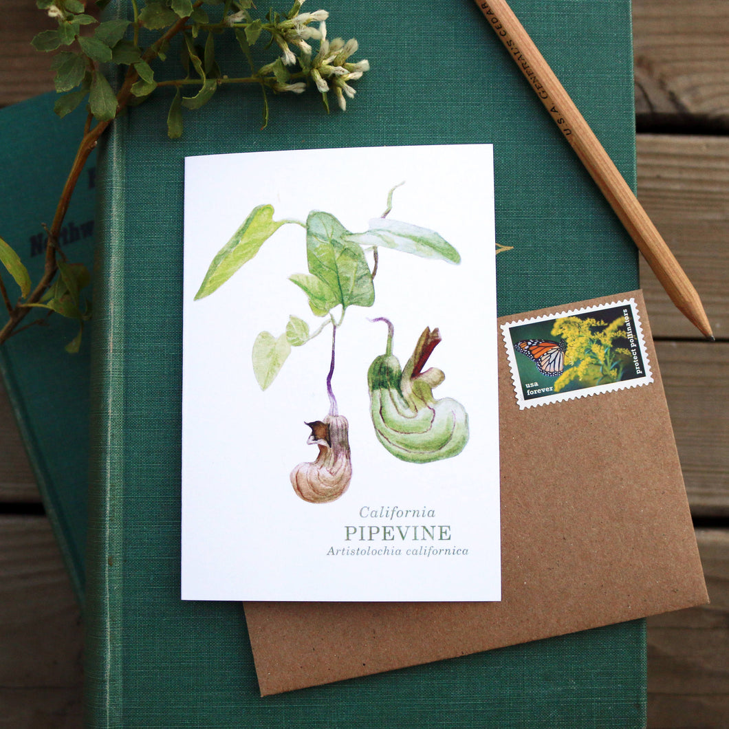 Native California pipevine watercolor note card