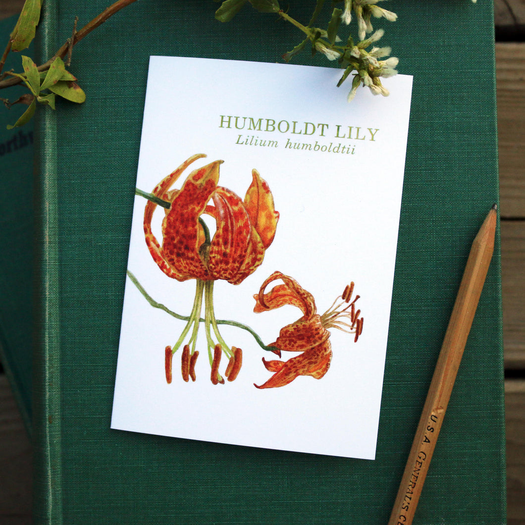 Native California humbolt lily watercolor note card
