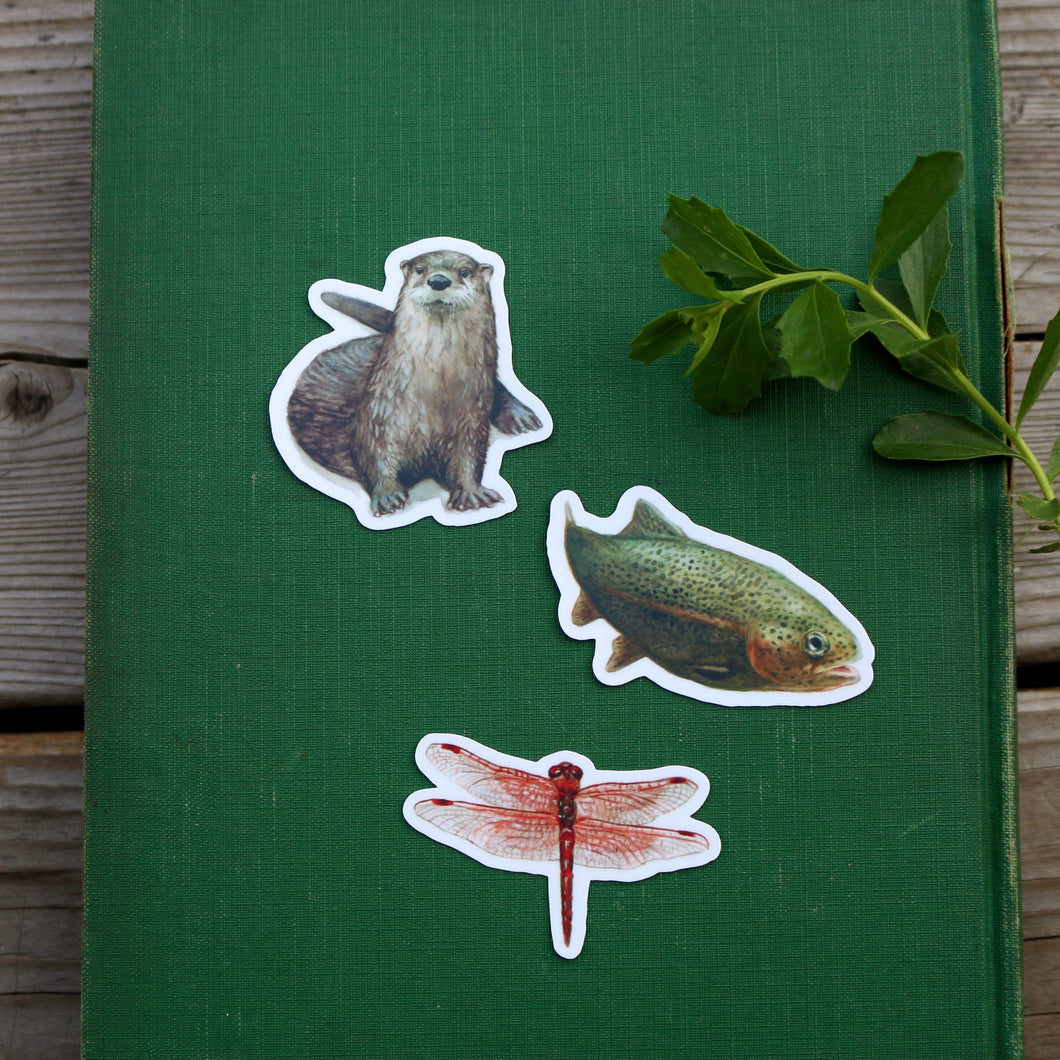 River Residents Stickers: Three Vinyl Stickers - River Otter, Rainbow Trout, Flame Skimmer Dragonfly