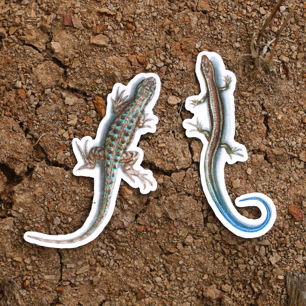 California Lizards: Two Vinyl Stickers, Western Skink and Coast Fence Lizard, Blue Belly Lizard