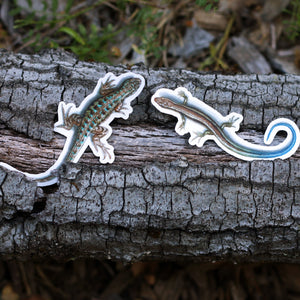 Lizards of California: Two Vinyl Stickers, Western Skink and Coast Fence Lizard, Blue Belly Lizard
