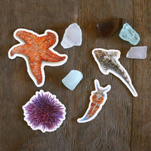 California Tide Pools Stickers: Four Vinyl Stickers, Ochre Sea Star, Nudibranch, Sea Urchin and Tide Pool Sculpin
