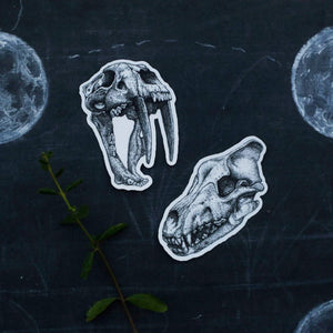 Extinct California: Two Skull Vinyl Stickers - Smilodon Saber Tooth Cat, Dire Wolf Skull
