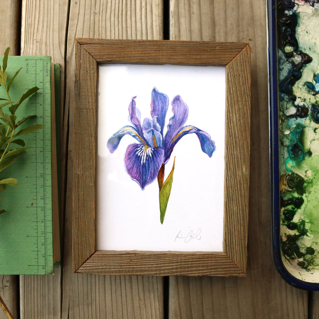 Douglas Iris  watercolor painting art print framed native California 5x7