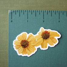 Desert Wildflowers Stickers: Desert Fivespot - Brittlebush - Desert Bluebells - Ghostflower -Four California Superbloom Vinyl Stickers