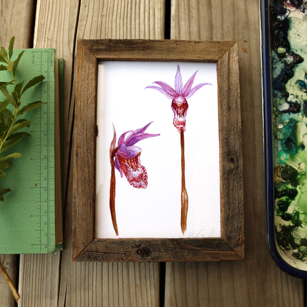 Calypso Orchid  watercolor painting art print framed native California 5x7