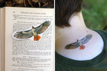 Red-tailed Hawk: Two Temporary Tattoos
