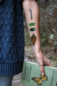 Monarch Metamorphosis Temporary Tattoos