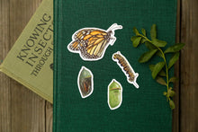 Monarch Metamorphosis Sticker Set- Four Vinyl Stickers
