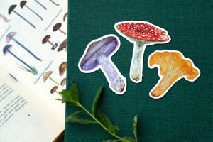 Mushroom Stickers- Three Vinyl Stickers - Amanita muscaria, Chanterelle, Blewit