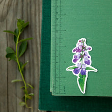 Wildflowers of California Stickers: Three Vinyl Stickers, Humboldt Lily, Bush Poppy, Purple Chinese Houses