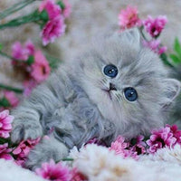 Fluffy Frolic Kitten - 5D Diamond Painting - 5D Diamond Painting - DIY Kits
