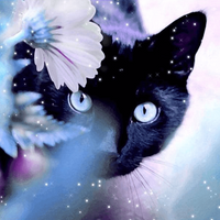 Black Cat  - 5D Diamond Painting - 5D Diamond Painting - DIY Kits