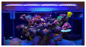 Nemolight II NL2- 96w Led aquarium