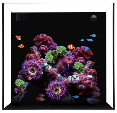 Waterbox Aquarium cube Nano 20 USA