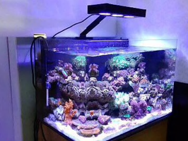 Aqua Knight LED marine