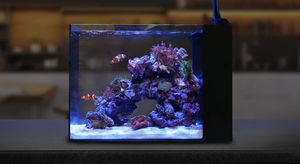 Copy of Waterbox Aquarium mini 15 USA penisula tank