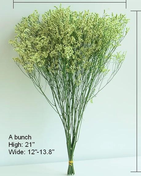 A Bunch Dried Crystal Grass Flowers, Dried Flower Arrangements, Caspia, Limonium - Art Painting Canvas