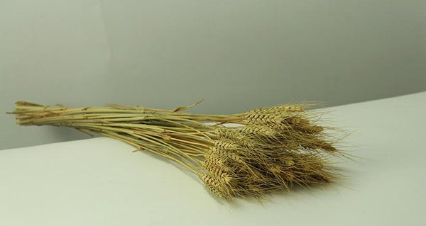 Rustic Dried Floral Arrangement, A Bunch of Dried Wheat, Dried Plant