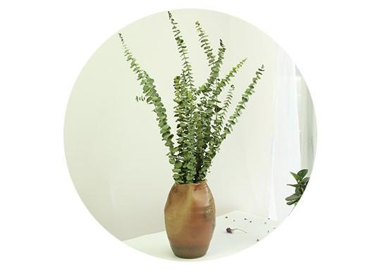 Dried Silver Dollar Eucalyptus, Dried Flowers, Dried Greenery, Eucalyptus Garland, Dried Leaves