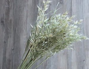 Dried Avena Green Oats, Grass Bundle, Dried Leaf, Dried floral arrangement, natural dried plant, grass bouquet