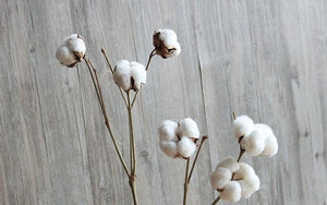 Cotton Stem - Preserved Cotton Flower - Cotton Plant - Dried Flowers Bunch - Cotton Flower Arrangement