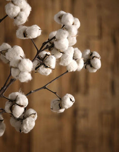 Dried Cotton Stalks, Cotton Stalks, Dried Decor, Natural Decorations, Cotton Flower